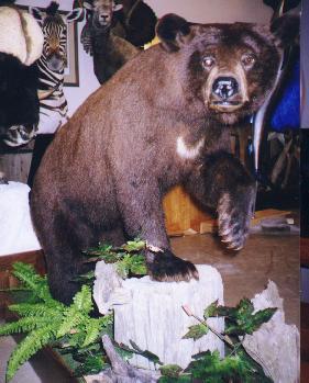 docs bear