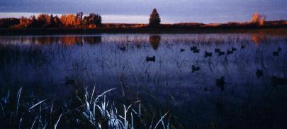 minnow lake